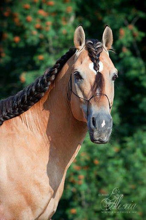 اسب دوانی در جدول چیست؟
